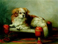 llassa, a tibetan spaniel lying on a stool by florence jay