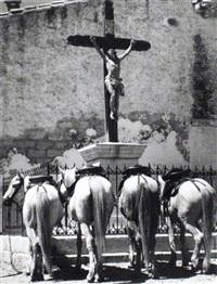 die betenden pferde in les-saintes-maries-de-la-mer by pan walther