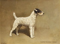 "wire fox terrier ""champion newmarket cackler"" by alfred grenfell haigh"