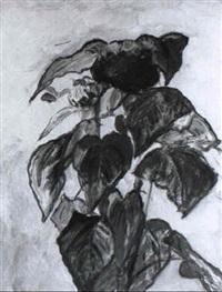 sonnenblumen by julius huth