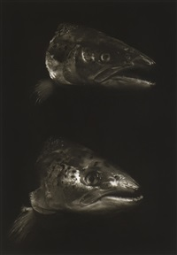 fish (3 works) by bruce rae