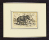 wild animals (group of 7) by william home lizars