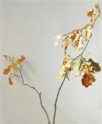 oak leaves by david denby