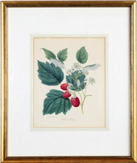 (botanicals): nineteen plates (19 works) by j. andrews