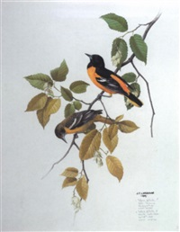 icterus galbula (northern oriole) by james fenwick lansdowne