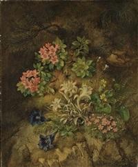 edelweiss et autres fleurs dans un sous-bois by theodor petter