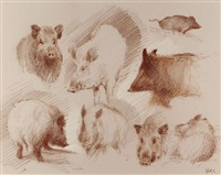 sanglier (studies) by patrice bac