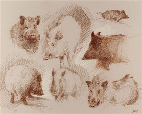 sanglier studies by patrice bac