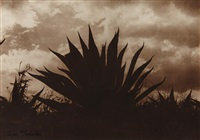 maguey by tina modotti