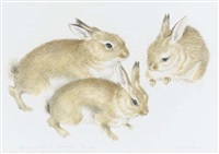 young rabbits by mildred eldridge
