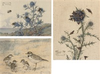 sea-holly (+ 2 others; 3 works) by daisy smith
