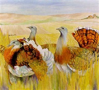 Great bustards in Extremadura, Spain, 1997–1997