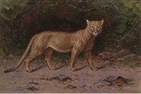 a puma in a woodland glade by henry raschen