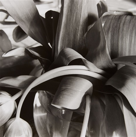 stems by lee friedlander