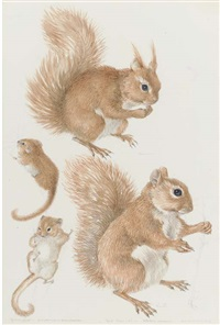 squirrel and dormouse by mildred eldridge