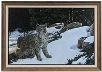 winter's light - bobcat by kyle sims