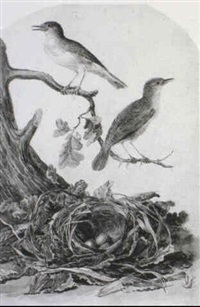 a pair of wagtails with their nest by jan christiaan sepp