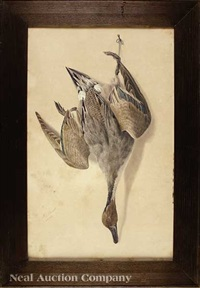 nature morte: pintail by george luis viavant