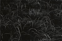 grasses, wisconsin by harry callahan