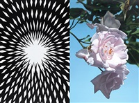 absract rose 7 by mustafa hulusi