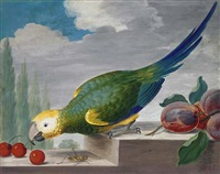 a green parrot on a ledge pecking at cherries, with a grasshopper below by j. f. hefele