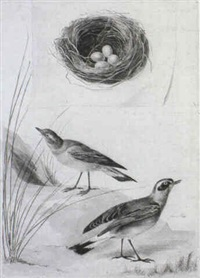 two wagtails, and above, a nest by jan christiaan sepp