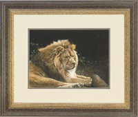 resting lion by lindsey selley