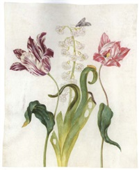 a white and violet tulip, a hyacinth, a white and red tulip and a marbled tuffett and its pupa and caterpillar by johanna helena graff