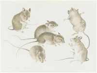 studies of house mice by mildred eldridge