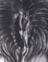 sous egypte (from 2000 photographies du sexe d'une femme) by henri maccheroni