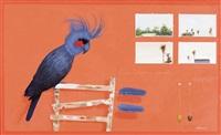 palm cockatoo (cape york) by graeme k. townsend