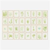 33 erbe (portfolio of 33) by giuseppe penone