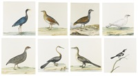a guinea fowl and a pied wagtail (8 works) by dutch school (18)