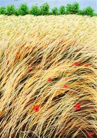 il fruscio dell'erba by franco azzinari