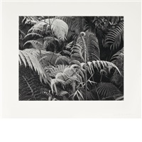 ferns by brett weston