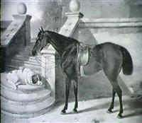 a bay hunter with a dog by edward lloyd