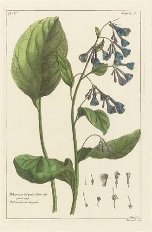 Dictionnaire universel des plantes arbres et arbustes de for Plantes et arbustes