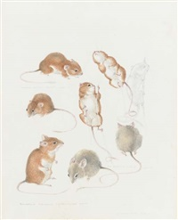 study of mice by mildred eldridge