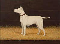 """waingroves lill"" (+ ""donawyn duke"", bull terriers; 2 works) by h. stevenson"