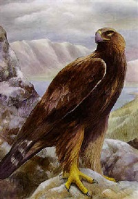 A golden eagle in a mountainous landscape