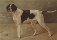 colonel blain's first gun dog by h. hardey simpson