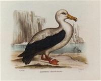 atlante zoologico popolare, opera compilata sui più recenti lavori di zoologia italiani e stranieri by giovanni boschi