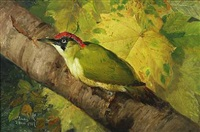 green woodpecker on a branch by niels peter rasmussen