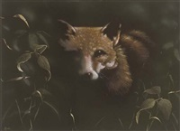 fox at night by john higginbotham