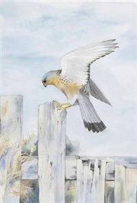A kestrel on a post, 1989