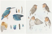 kingfisher (+ robin; 2 works) by mildred eldridge