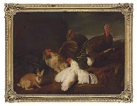 hens, turkeys, a duck and a rabbit, in a park landscape by giovanni agostino (abate) cassana