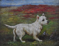 highland terrier by maud earl