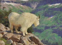 mountain goat by tucker smith