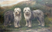 two sheep dogs in an open landscape, with sheep beyond by adrienne lester